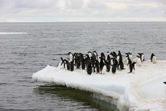 penguinsonedge